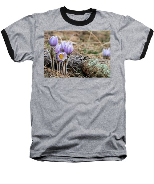 Pasque Flower Baseball T-Shirt