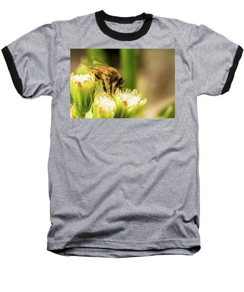 Pollen Collector  Baseball T-Shirt by Jay Stockhaus