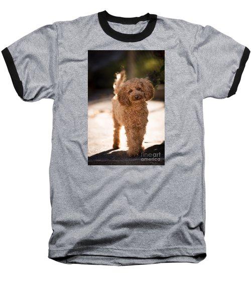 Poodle Baseball T-Shirt by Maurizio Bacciarini