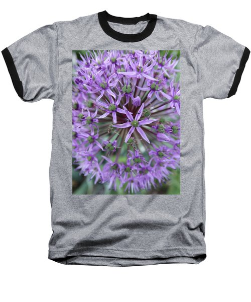 Purple Allium Burst Baseball T-Shirt by Rebecca Overton