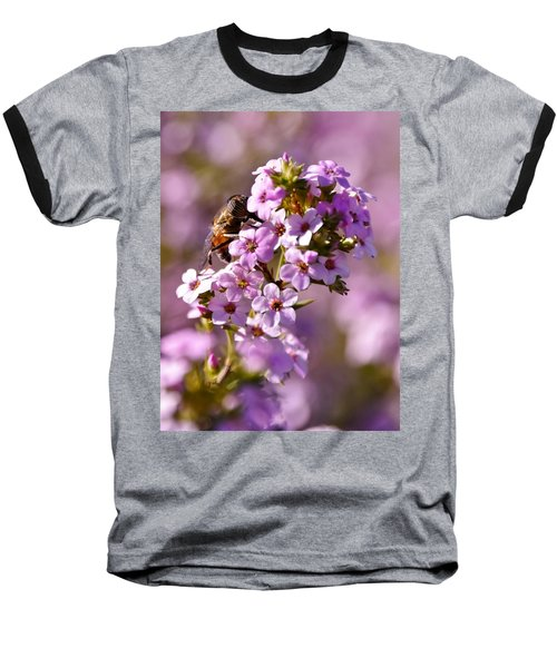 Purple Blossoms And Hoverfly Baseball T-Shirt by Werner Lehmann