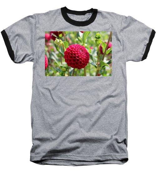 Red  Dahlia Baseball T-Shirt