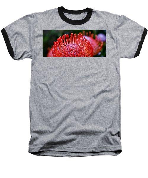Red  Pincushion Protea Baseball T-Shirt by Werner Lehmann