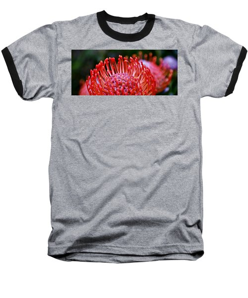 Red  Pincushion Protea Baseball T-Shirt