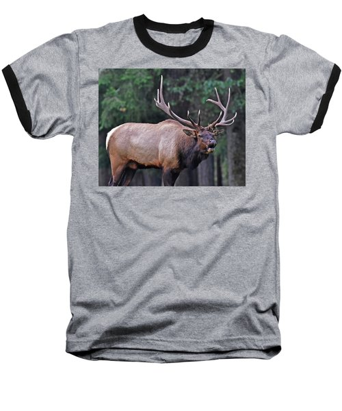 Baseball T-Shirt featuring the photograph  Royal Roosevelt Bull Elk by Jack Moskovita