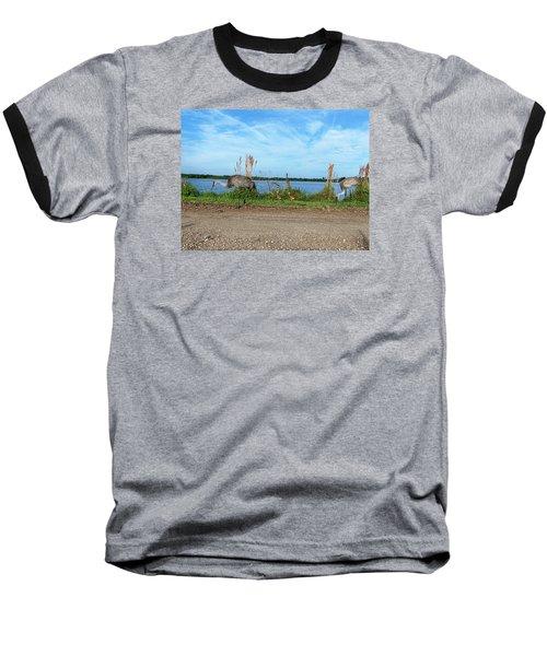 Sandhill Crane Family  Baseball T-Shirt by Chris Mercer
