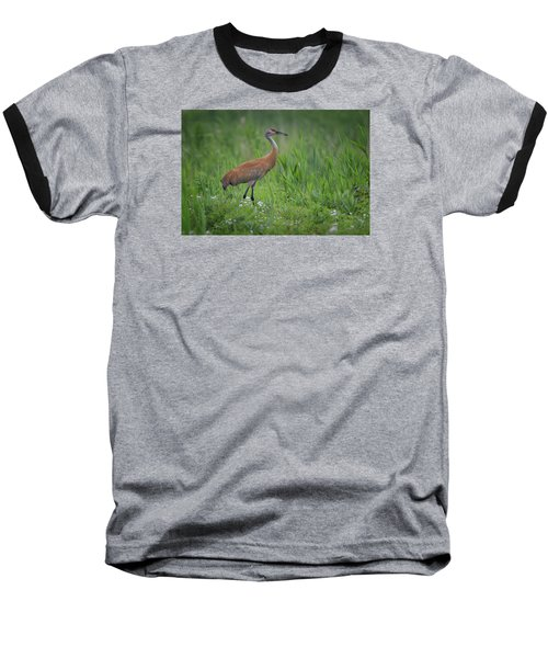 Sandhill Crane Baseball T-Shirt by Gary Hall
