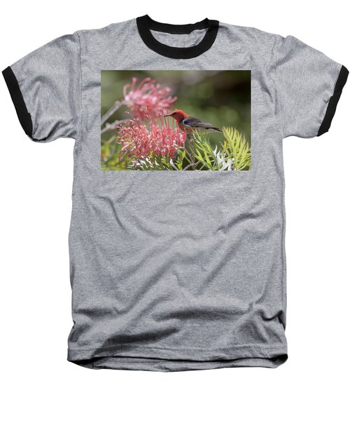 Scarlet Honeyeater Baseball T-Shirt