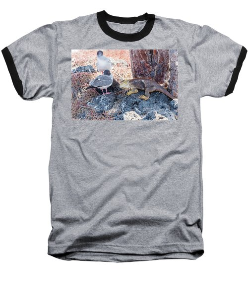 Swallow Tailed Gull And Iguana On  Galapagos Islands Baseball T-Shirt