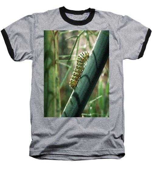 Swallowtail Caterpillar Baseball T-Shirt by Meir Ezrachi