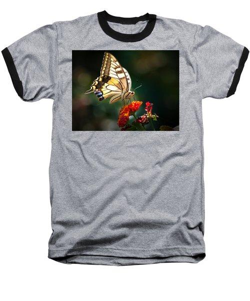 Swallowtail Baseball T-Shirt by Meir Ezrachi