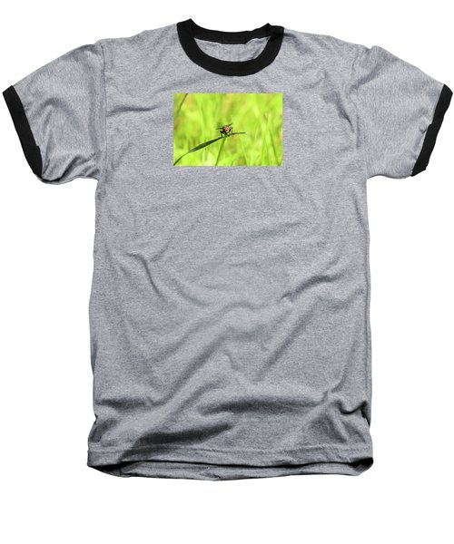 The Fly Baseball T-Shirt by David Stasiak