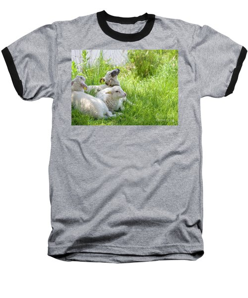 Baseball T-Shirt featuring the photograph Three Little Lambs by Patricia Hofmeester