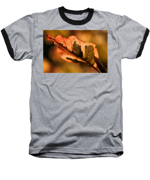 Tri-color Beech In Autumn Baseball T-Shirt by Angela Rath