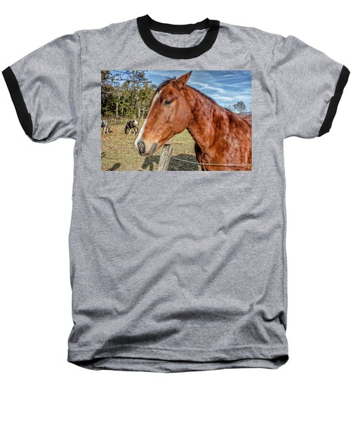 Baseball T-Shirt featuring the photograph Wild Horse In Smoky Mountain National Park by Peter Ciro