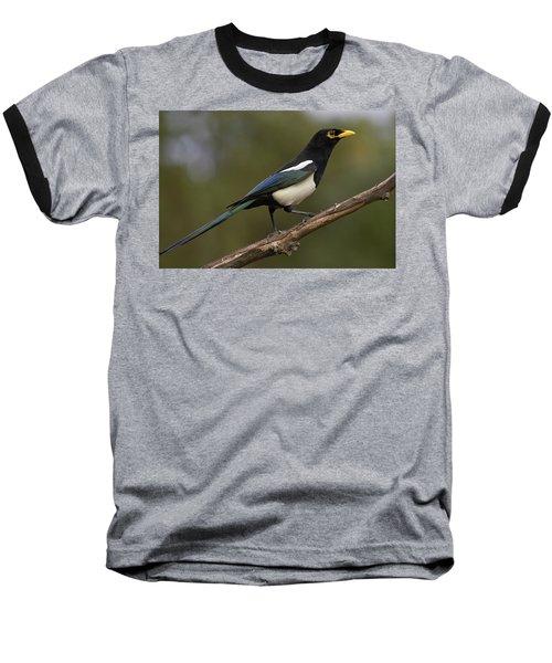 Yellow-billed Magpie Baseball T-Shirt