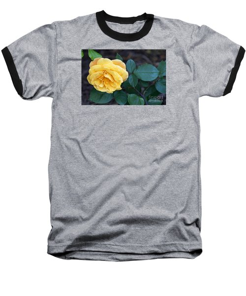 Yellow Rose Baseball T-Shirt by Debra Crank