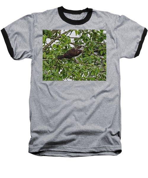 Osprey Fishing Baseball T-Shirt