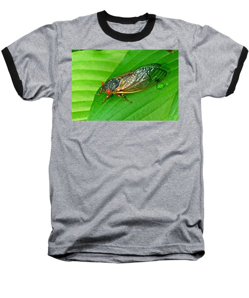 17 Year Periodical Cicada Baseball T-Shirt