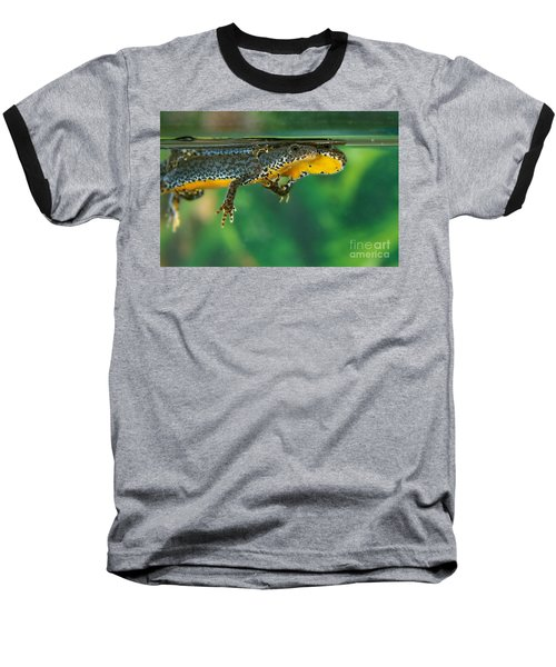 Alpine Newt Triturus Alpestris Baseball T-Shirt