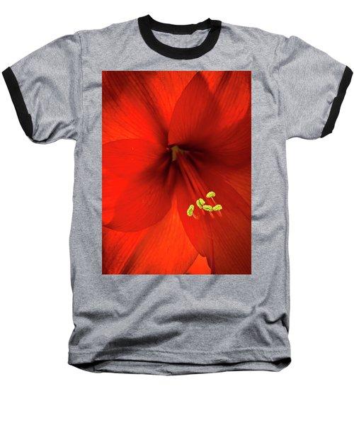 Amaryllis Baseball T-Shirt by Denis Lemay