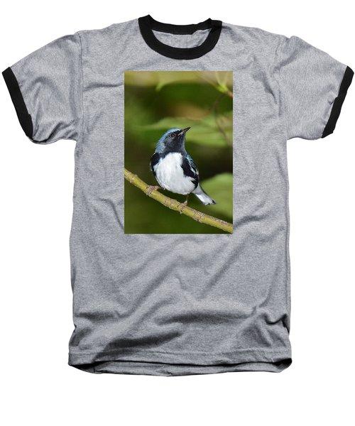 Black-throated Blue Baseball T-Shirt by Alan Lenk