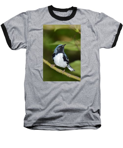 Black-throated Blue Baseball T-Shirt