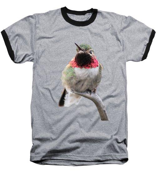 Broad-tailed Hummingbird Baseball T-Shirt by Shane Bechler
