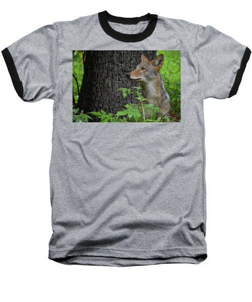 Early Morning Coyote In Maine Baseball T-Shirt