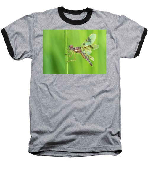 Eastern Amberwing Baseball T-Shirt