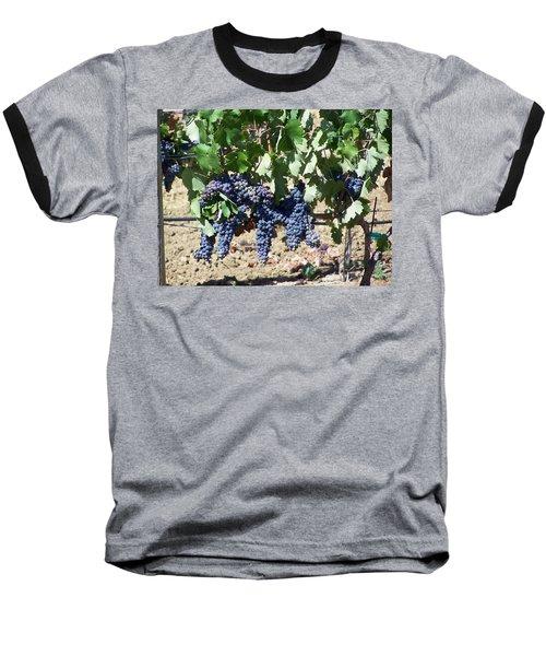 Grapevine Baseball T-Shirt by Pamela Walrath