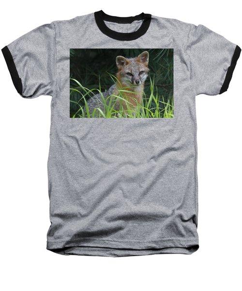 Gray Fox In The Grass Baseball T-Shirt