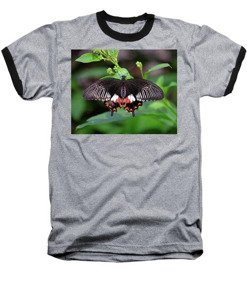 Great Mormon Butterfly Baseball T-Shirt