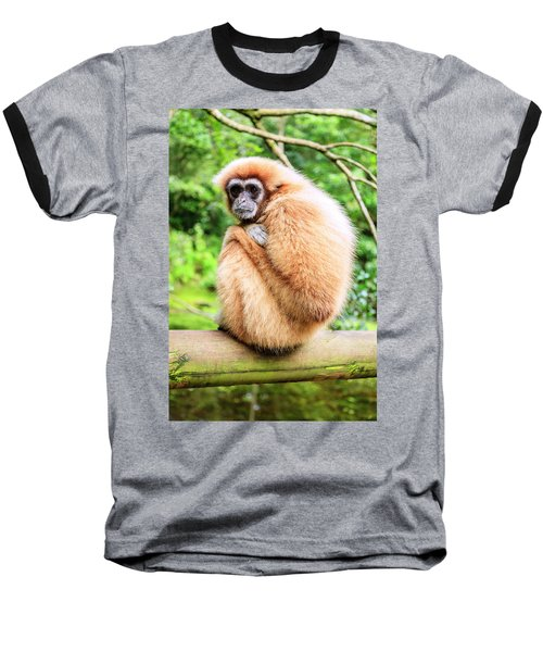Baseball T-Shirt featuring the photograph Lar Gibbon by Alexey Stiop