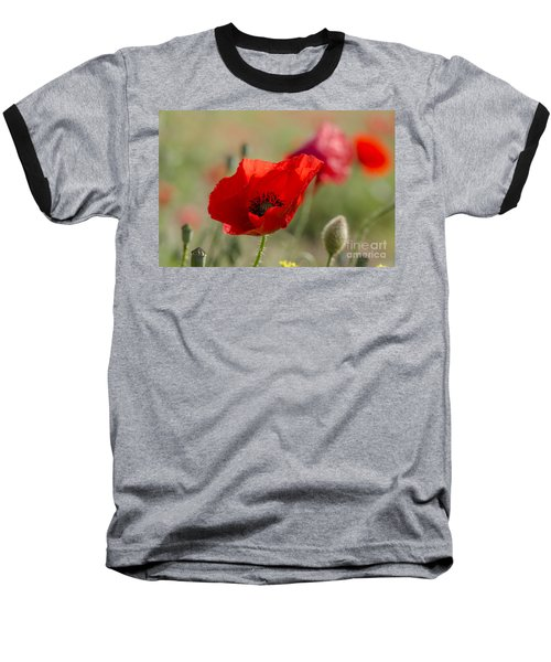 Poppies In Field In Spring Baseball T-Shirt by Perry Van Munster