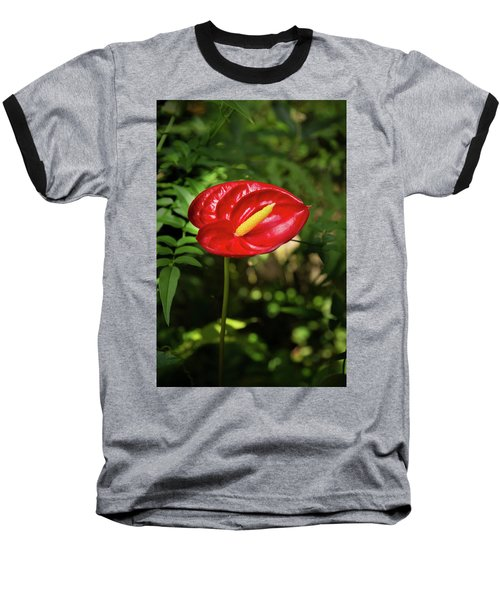 Red Anthurium Flower Baseball T-Shirt by Hans Engbers
