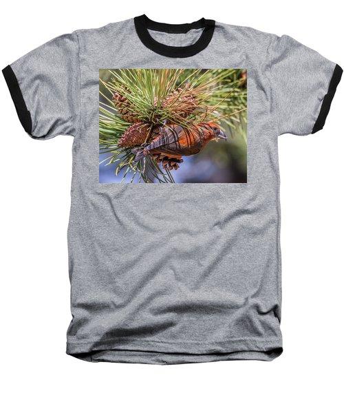 Red Crossbill Baseball T-Shirt by Michael Cunningham