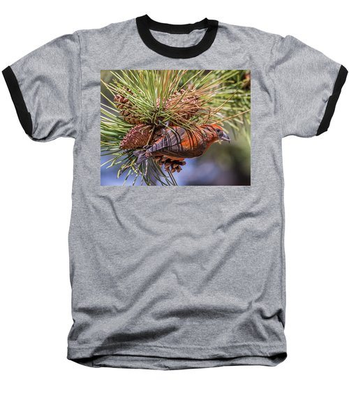 Red Crossbill Baseball T-Shirt