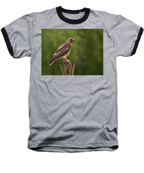 Red-tailed Hawk Baseball T-Shirt
