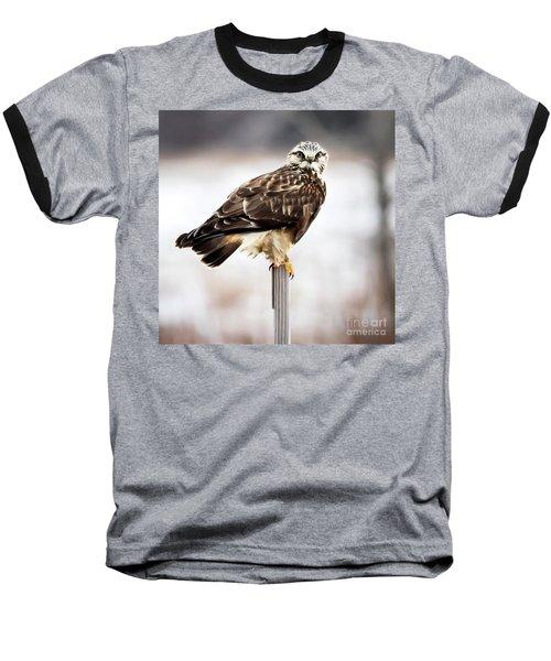 Rough-legged Hawk Baseball T-Shirt