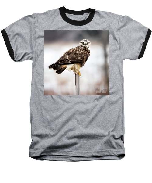 Baseball T-Shirt featuring the photograph Rough-legged Hawk by Ricky L Jones