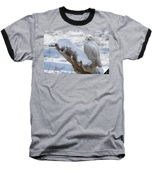 Baseball T-Shirt featuring the photograph Snowy Owl by Jim  Hatch