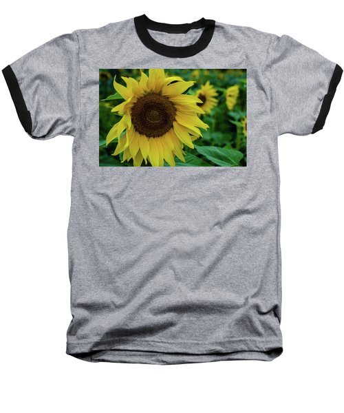 Sunflower Fields Baseball T-Shirt by Miguel Winterpacht