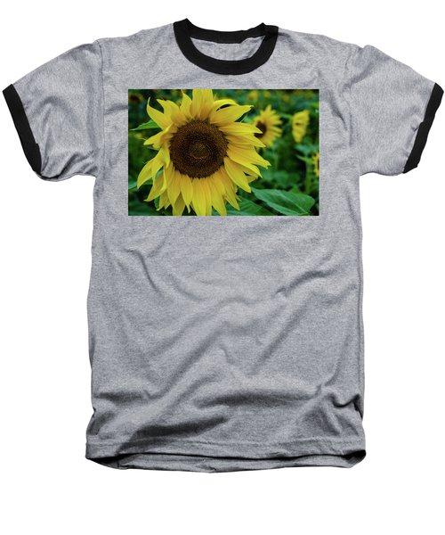 Sunflower Fields Baseball T-Shirt