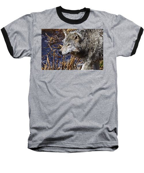 Baseball T-Shirt featuring the photograph Timber Wolf by Michael Cummings