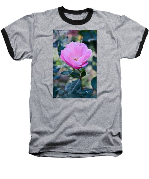 2015 After The Frost At The Garden Pink  Rose Baseball T-Shirt by Janis Nussbaum Senungetuk