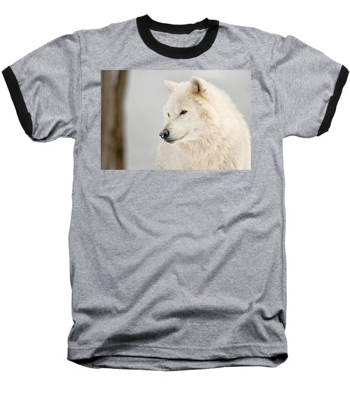 Arctic Wolf Portrait Baseball T-Shirt by Michael Cummings