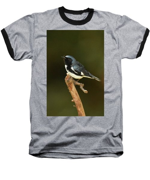 Black-throated Blue Warbler Baseball T-Shirt by Alan Lenk