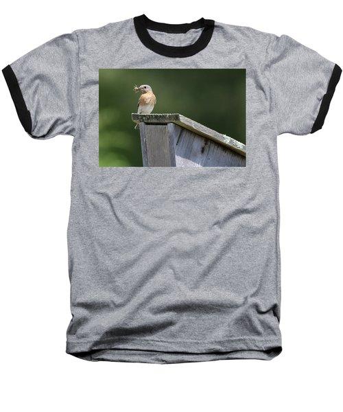 Eastern Bluebird Calverton New York Baseball T-Shirt