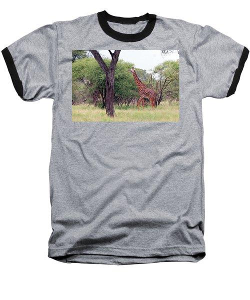 Giraffes Eating Acacia Trees Baseball T-Shirt